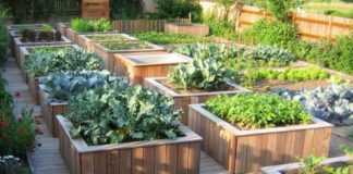 Building a raised vegetable patch for standing gardening |  Alsagarden