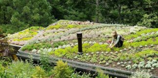 Create a green roof with Sedum, instructions for use!  |  Alsagarden