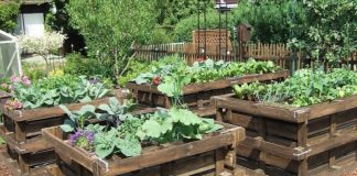 Making a square vegetable garden with salvaged pallets |  Alsagarden