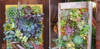 Making an array of succulents and succulents |  Alsagarden