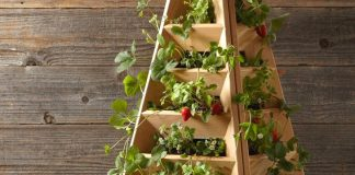 Strawberry fountains: Record yields in small spaces!  |  Alsagarden
